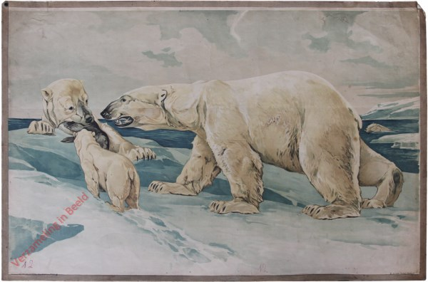 12 - [Polarbär]