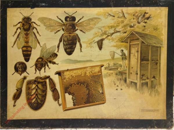 27 - [Honigbiene]