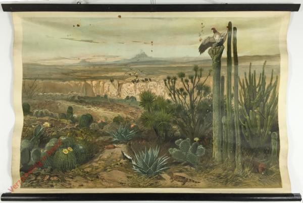 Amerika. 1 - Vegetatie en fauna van de centrale steppe