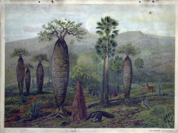 Amerika. 2 - De vlakten van Noordelijk Zuid-Amerika(?)