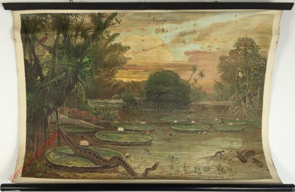 Amerika. 3 - De oever van een rivier in Guyana
