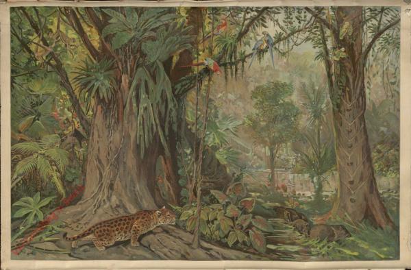 Amerika. 4 - In de bergachtige jungle van Brazilië