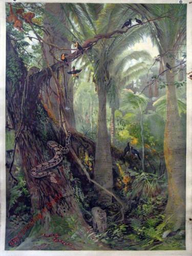 Amerika. 5 - In de oerbossen van Oost-Brazilië