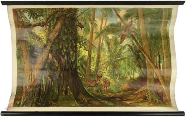 Azië. 15 - In het binnenland van Ceylon