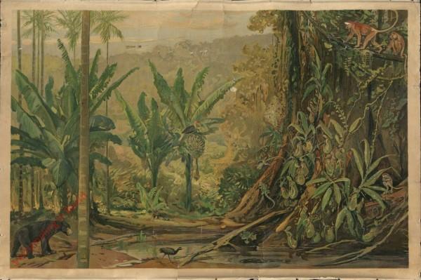 Azië. 17 - Op het eiland Borneo