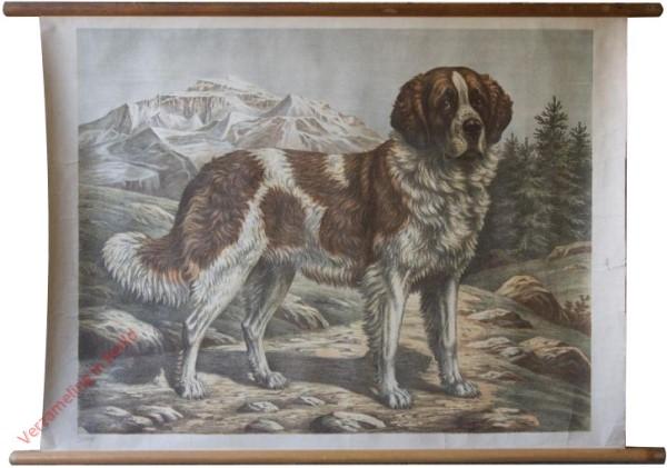 1 - Hund