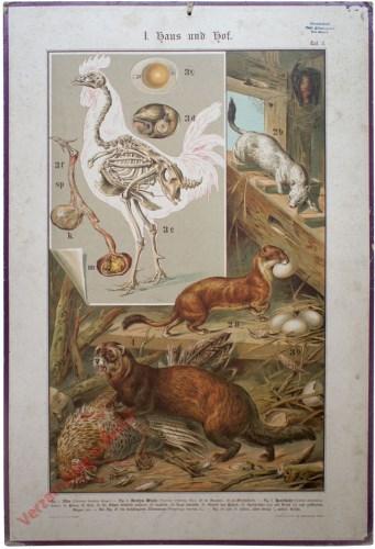 I. Haus und Hof, Taf. 3 - [Vleermuis, kip, marterachtigen, hermelijn, bunzing]
