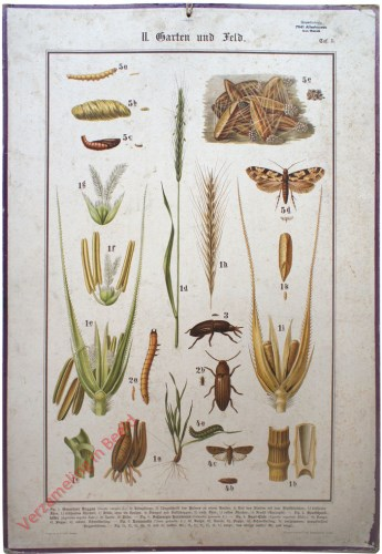 II. Garten und Feld, Taf. 5 - [Graan, kevers]