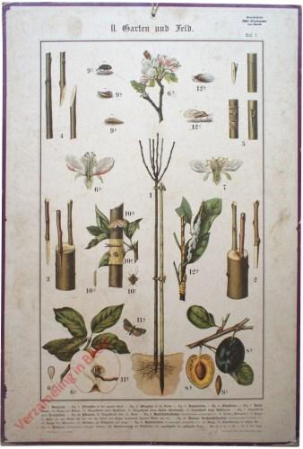II. Garten und Feld, Taf. 7 - [Fruitbomen, pruim]