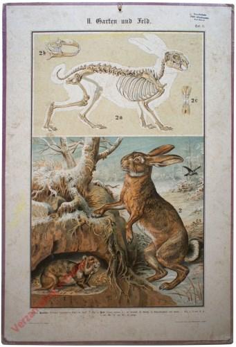 II. Garten und Feld, Taf. 9 - [Haas, korenwolf / hamster]