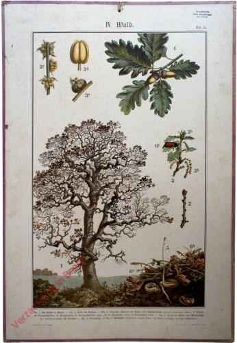 IV. Wald, Taf. 14 - [Eik]