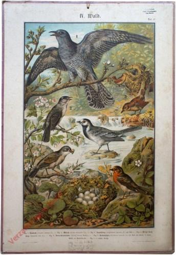 IV. Wald, Taf. 17 - [Koekoek, winterkoning, zwartkop, witte kwikstaart, braamsluiper, roodborst]