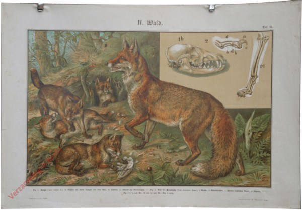 IV. Wald, Taf. 21 - [Vos]