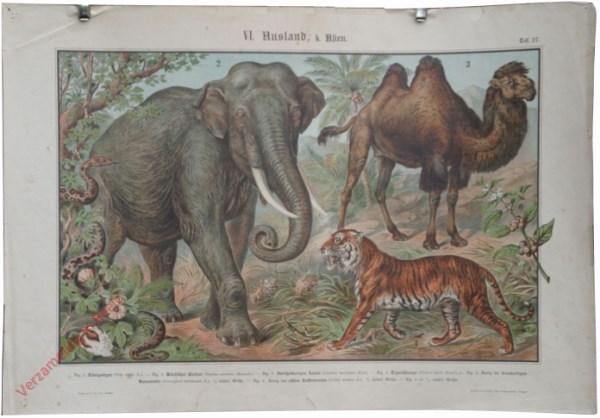 VI. Ausland, b. Asien, Taf. 27 - [Indische olifant, kameel, tijger, slang]