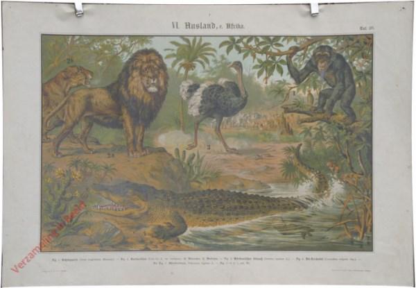 XV - In Afrika