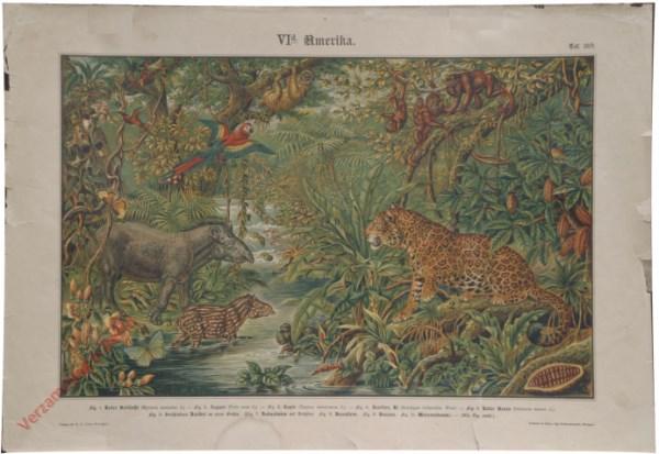 VI. Ausland, d. Amerika, Taf. 28b - [Tapir, papagaai, luipaard, luiaard, brulaap]