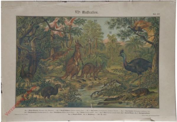 VI. Ausland, e. Australien, Taf. 28c - [Kakatoe, emoe, paradijsvogel, vogelbekdier, vliegende eekhoorn, kangoeroe]