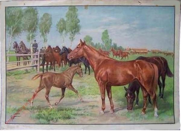 1 - Pferd
