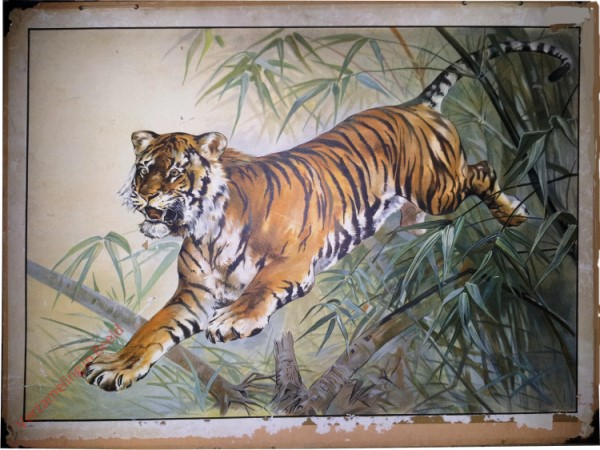 3 - Tiger