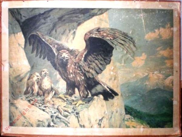 4 - Adler