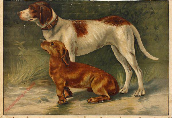 7 - Hund