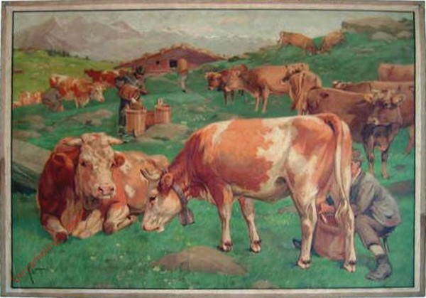 8 - Kuh [roodbont]