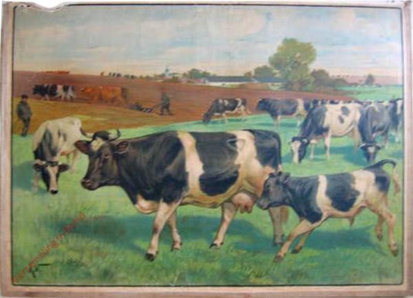 8 - Kuh [zwartbont]
