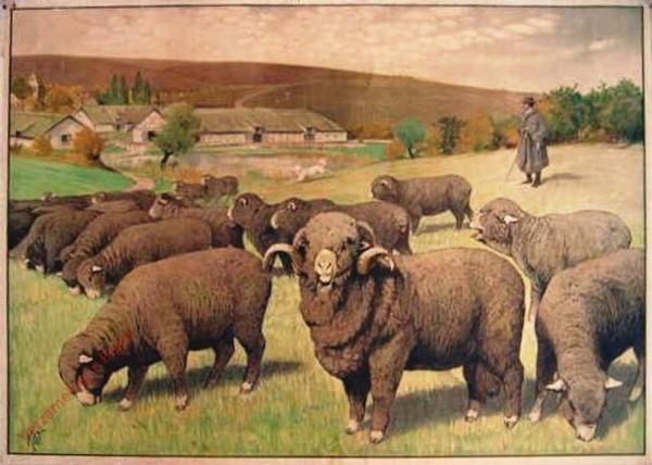 10 - Schaf
