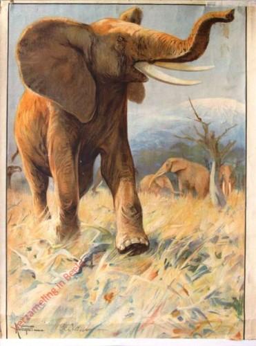 16 - Elefant