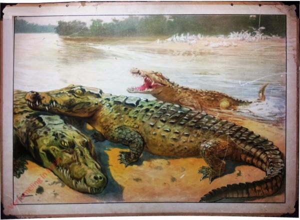 19 - Krokodil