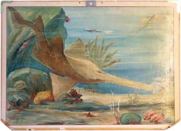 25 - Sägehai