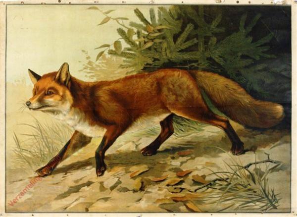 26 - Fuchs