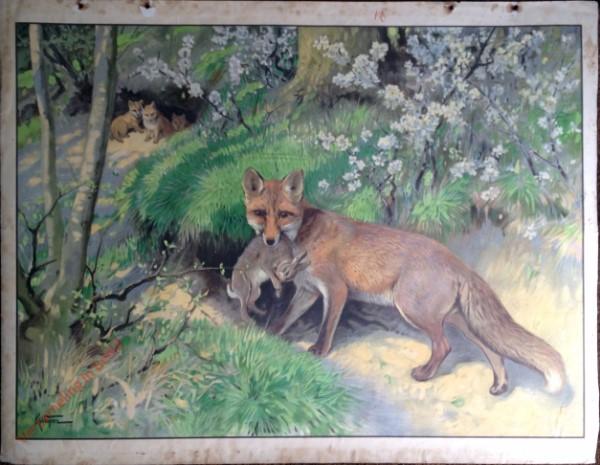 26 - Fuchs [herzien]
