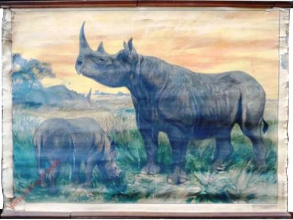 27 - Nashorn