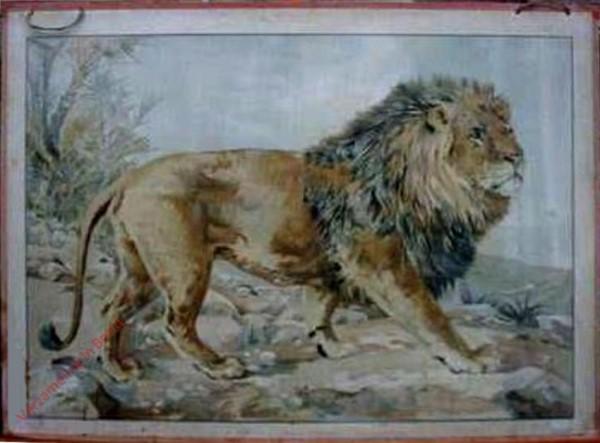 31 - Löwe