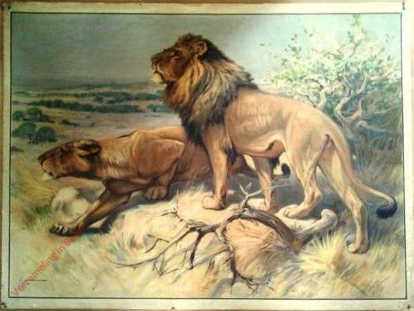 32 - Löwin