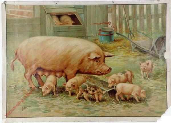 38 - Schwein