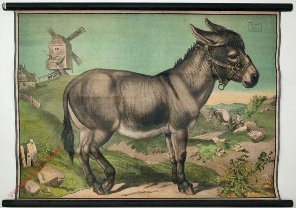 39 - Esel
