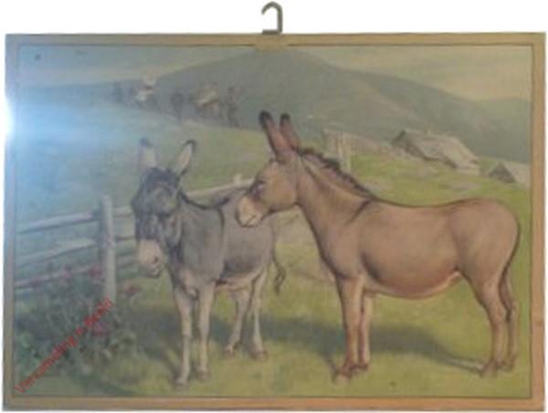 39 - Esel [herzien]