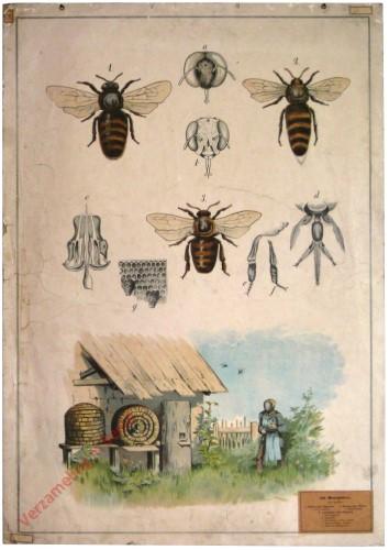 42 - Honigbiene