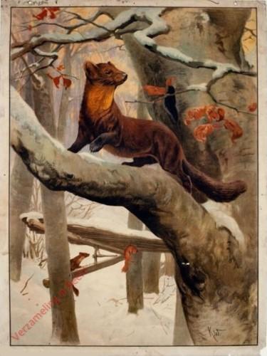 48 - Eichhörnchen und Marder