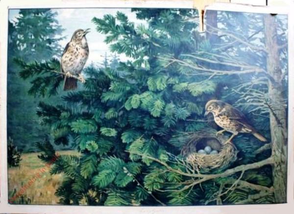 54 - Singvögel I