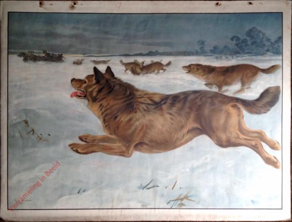 57 - Wolf