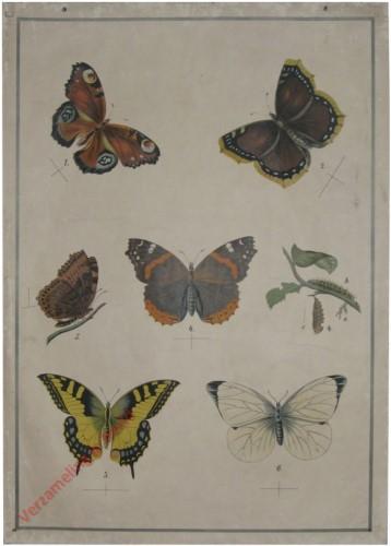 63 - Schmetterlinge I