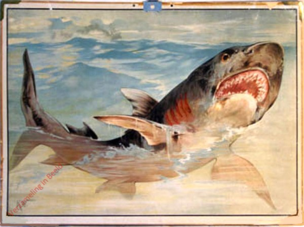72 - Menschenhai