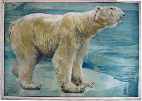 74 - Eisbär