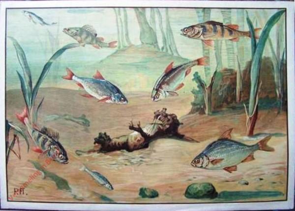 86 - Süsswasserfische