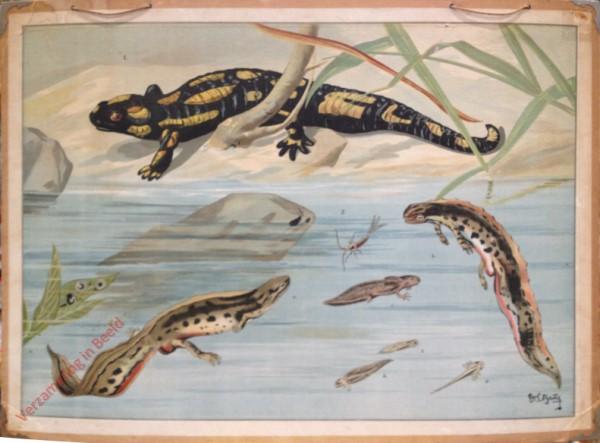 97 - Salamander