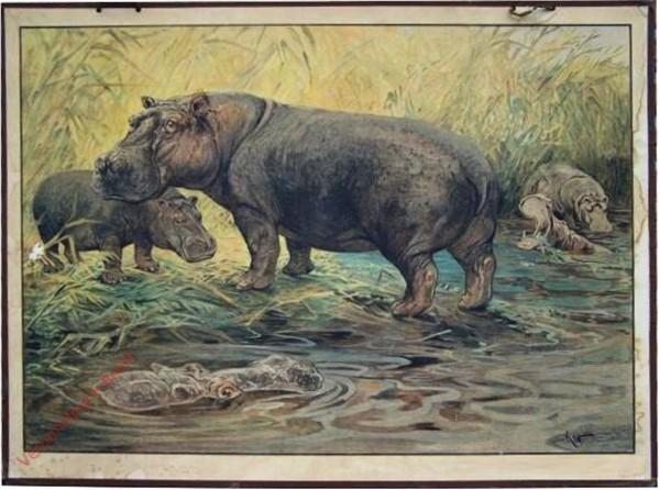 101 - Flusspferd