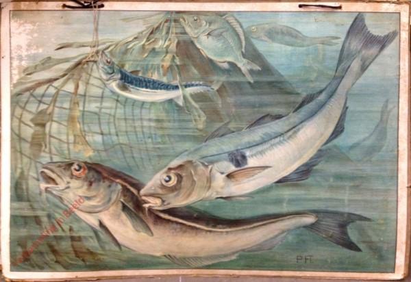 129 - Schelfish mit Makrele und Brasse
